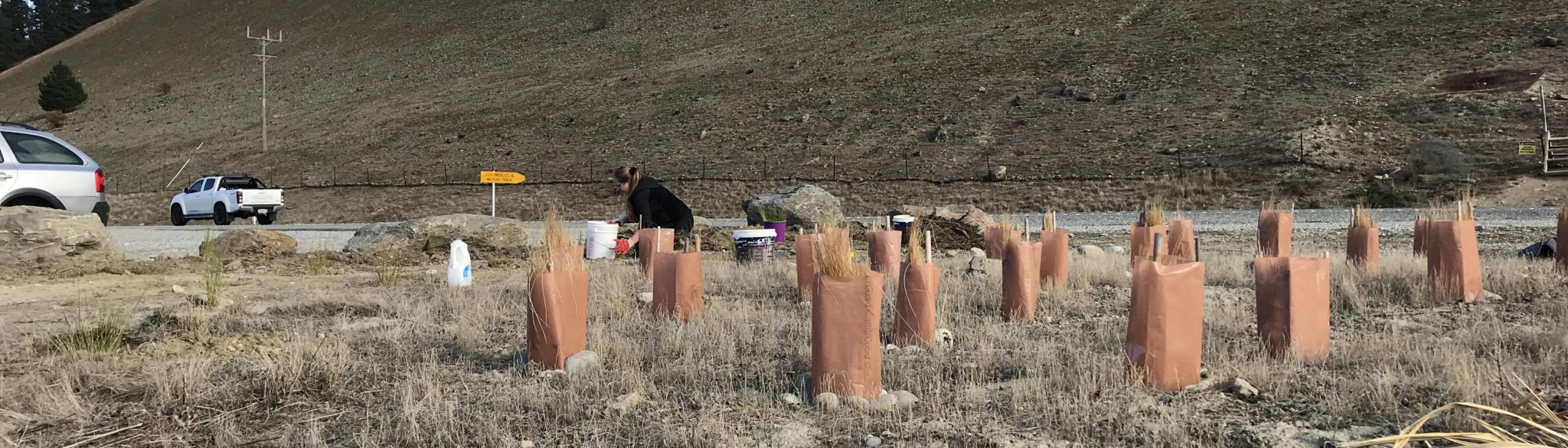 native planting cromwell hard landsdcape